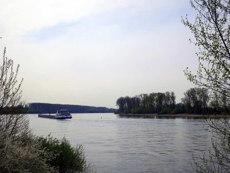 01 04 2017 Lampertheimer Altrhein Biedensand Bonnaue Rhein